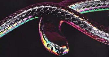 Don Design – Python ft. AKA & Moozlie
